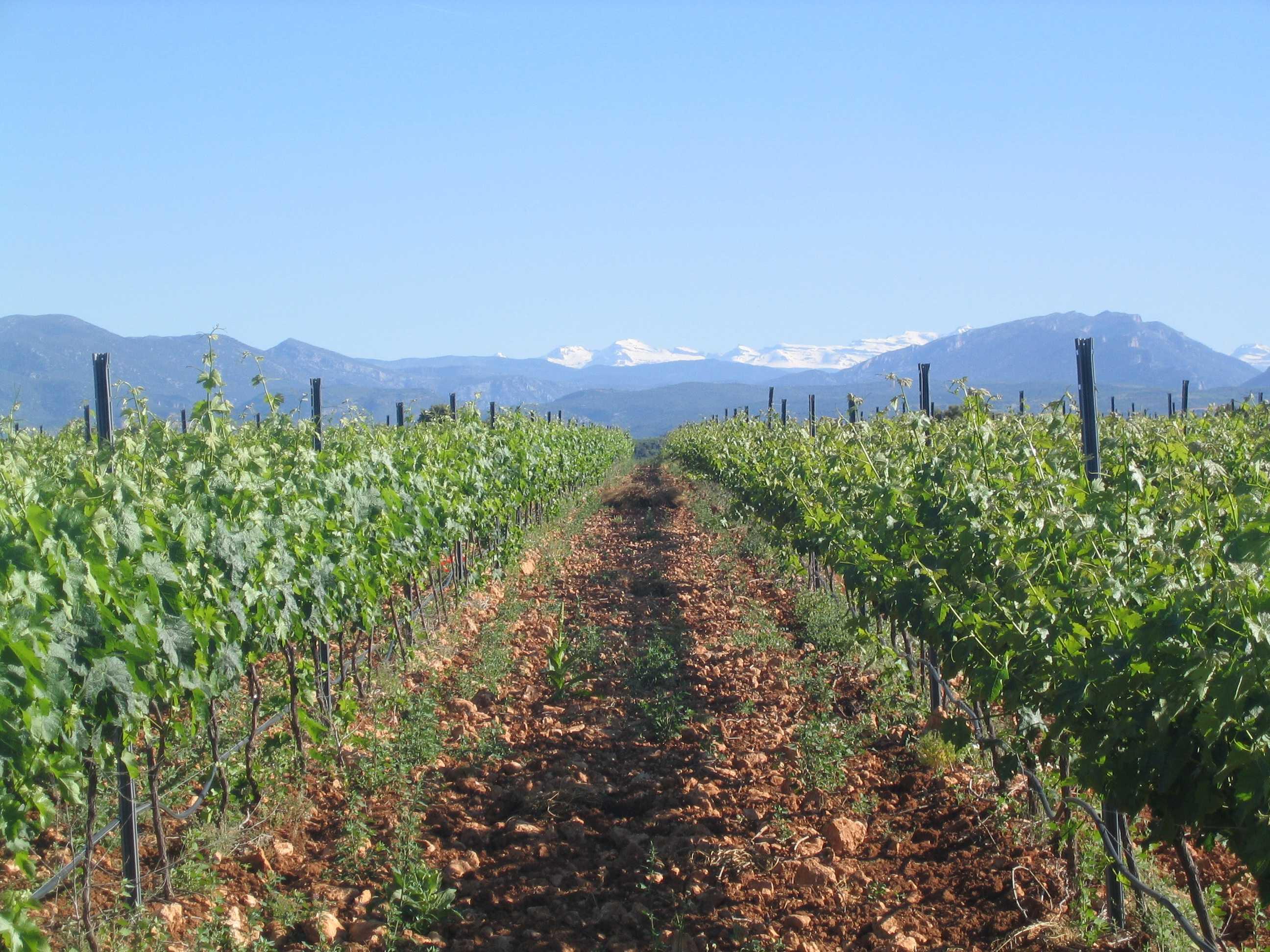 WineTuning - Somontano
